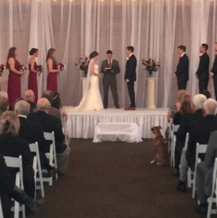 wedding at iron gate equestrian center in columbus ohio